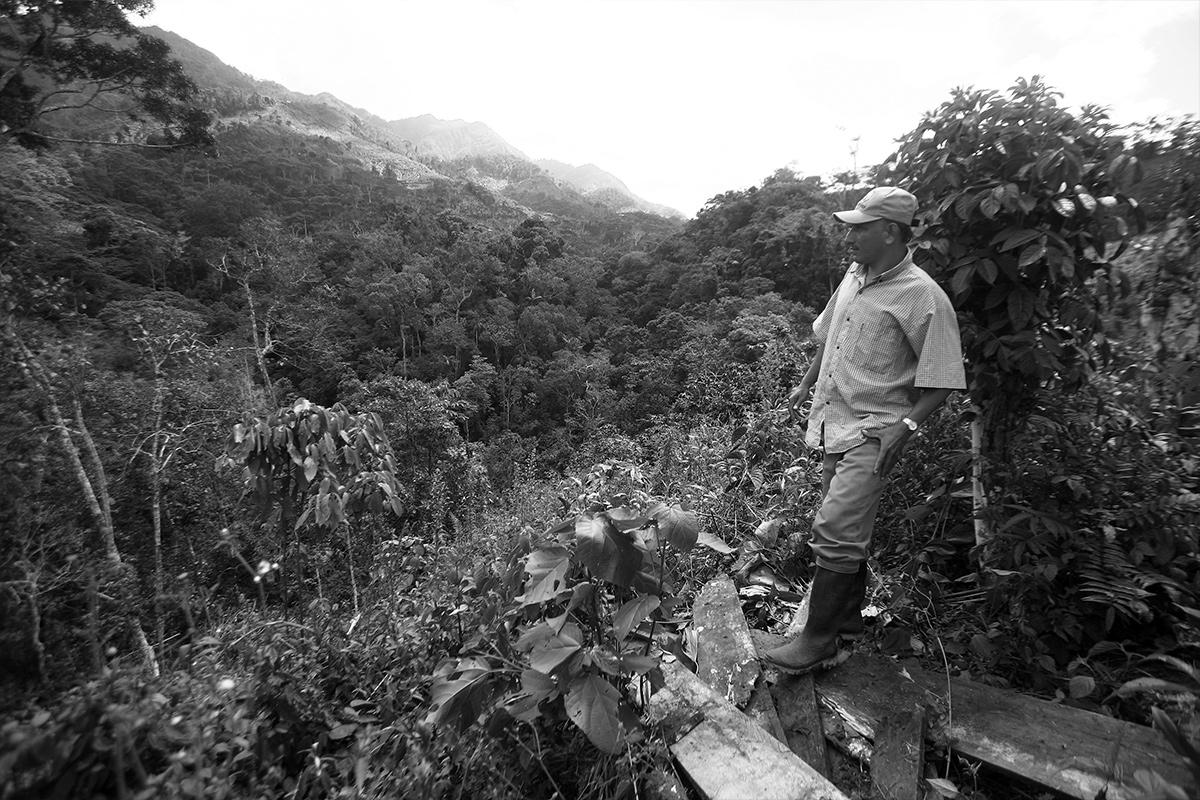 Caficultor, Chanchamayo-Perú