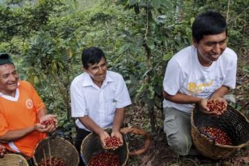 SITUACION-DEL-CAFE-MINISTERIO-DE-AGRICULTURA-Y-RIEGO_1-617x351