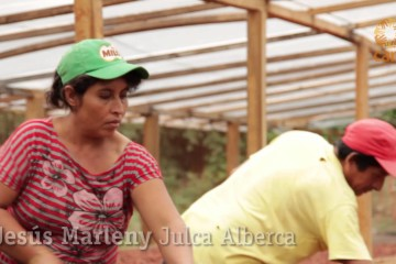 Cacao peruano: generando riqueza y desarrollo local