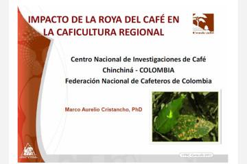 impacto-de-la-roya-en-el-cafe-la-caficultura-regional