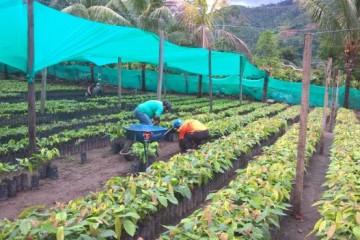 Cacao-Vraem-4-617x351