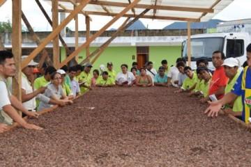 Cacao-617x351