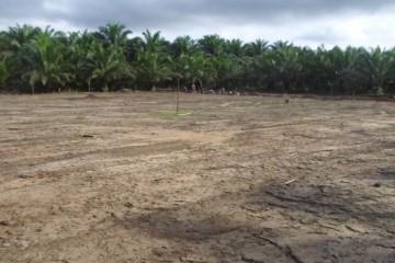 Terreno-para-la-planta-de-procesamiento-de-cacao-617x351