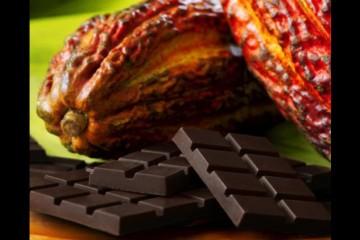 cacao_28