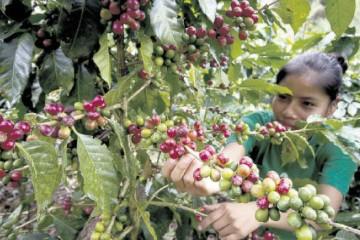 cultivos-Noticia-768149