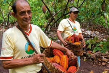 Se-alistan-para-participar-en-concurso-de-chocolate-peruano