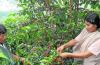 cafe-tunky-mayo-maravilla-natu-PNG_604x0