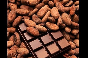 cacao-617x328