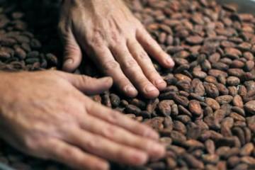 cacao-beneficios-salud-kncd-620x349abc