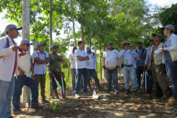 Ucayali-Fortalecen-capacidades-en-materia-de-cultivo-del-cacao-2-617x351