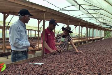 Fertilizantes de alta tecnología en el cultivo de cacao y aguacate