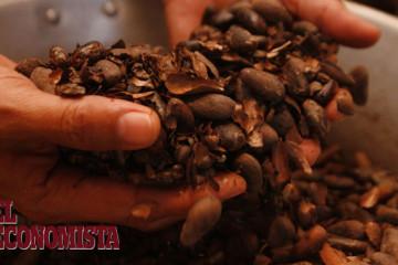 Nuevas investigaciones para mejorar la producción de cacao en A.L.