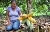 Cacao seguirá siendo uno de los principales productos de exportación en San Martín