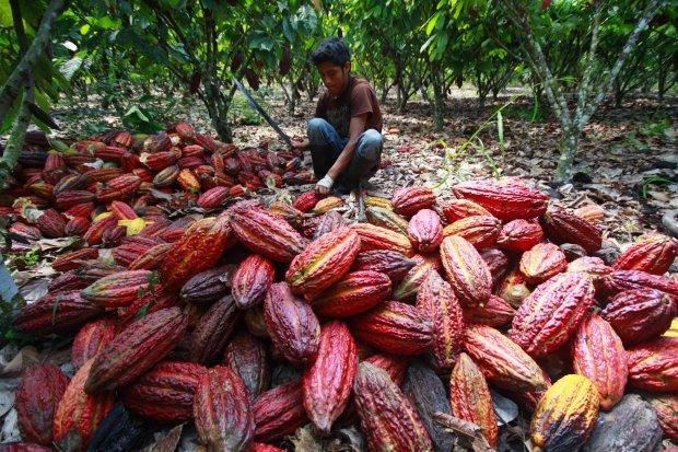 Café y cacao tendrán marca única para incentivar envíos