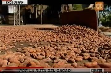rutadel cacao