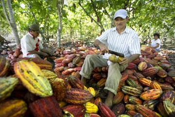 Agrobanco y Alianza Cacao firman convenio a favor de productores cacaoteros
