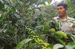 Homogenizar calidad de café será crucial para crear marca país