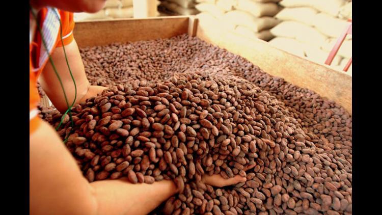 """Rolando Herrera: """"Aquí producimos el primer chocolate orgánico del Perú"""""""