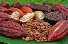 Producción de cacao alcanza récord histórico en Perú con 108,000 toneladas