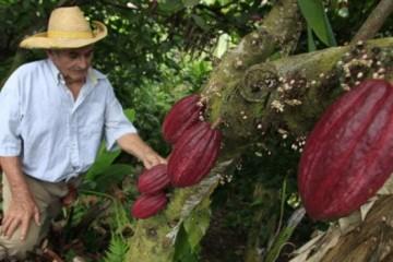 Juanjuí será sede de festivales agrícolas sobre el cacao y la naranja