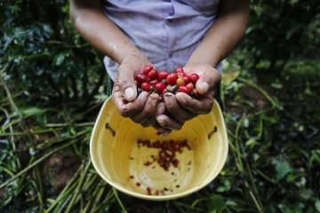 La ruta del mejor café del mundo