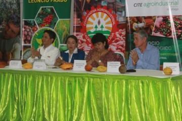 Impulsan mejora del cultivo del cacao en Huánuco