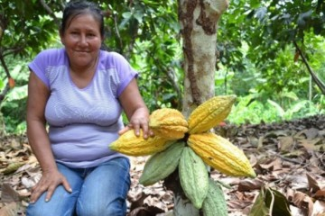 Instalarán 236 hectáreas de cacao en provincia de Tocache, en San Martín