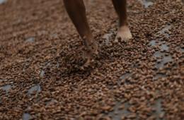 Minagri: Exportaciones de cacao y café superaran los US$ 1,100 millones en 2017
