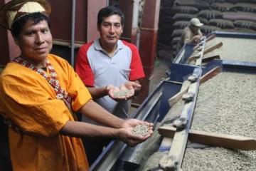 Ingleses disfrutan café peruano de bosques conservados