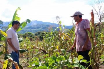 Lamas-Produccion-de-cafe-con-el-sistema-de-riego-superara-los-70-quintales-por-hectarea-2-617x351