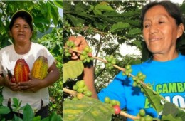 Expo Amazónica 2017 permitirá la promoción de superalimentos peruanos