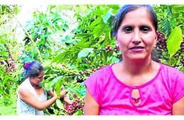 Junín: las mujeres de Pichanaki dirigen producción local de café