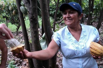Piura: Premios internacionales de Oro y Plata para chocolates con cacao piurano