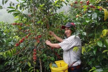 Conforman Mesa Técnica Binacional para mejorar la calidad de café