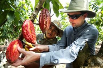 Devida: más del 80 % del cacao peruano se destina a la exportación