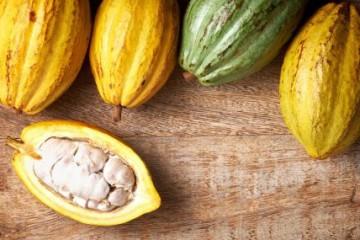 Cacao Chuncho del Cusco ingresará a mercados extranjeros con marca colectiva Kall Kakao