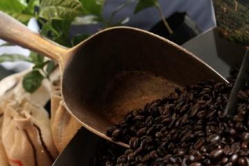 El cacao y el café a la conquista del mayor valle cocalero de Perú