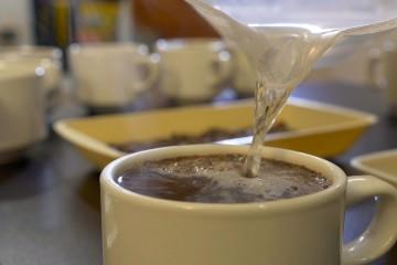 Cómo se Realiza el Proceso de Cata de Café – TvAgro