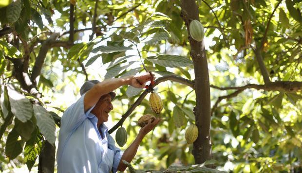 agricultor cacaotero sonrie
