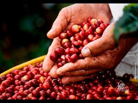 El Cultivo de Café como un Estilo de Vida