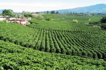 Nuevos Metodos de Cultivo y Cosecha del Café