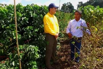 Tips del Profesor Yarumo, Productividad del cultivo del café