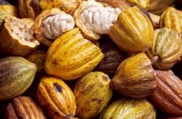 Cacao-prime