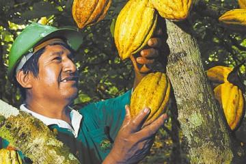caficultor boliviano