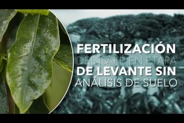 Fertilización de café en levante sin análisis de suelo – Tips del Profesor Yarumo