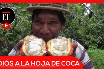 Perú remplaza el cultivo de hoja de coca por cacao y café | El Espectador