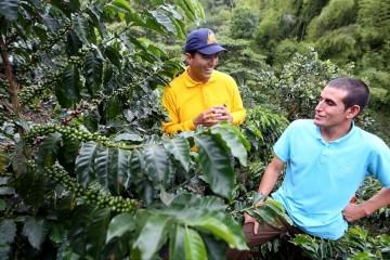 Tips del Profesor Yarumo | Variedad de café a sembrar