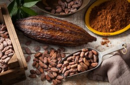 Semillas de cacao shutterstock