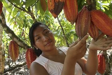 cacaotera vraem