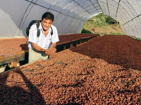 secado de semillas de cacao